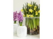 Hyacinter och narcisser i blandat material