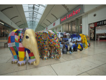 School elephants from Gateshead