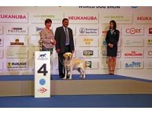 World Dog Show 2017 - Freude über Platz 4