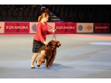 World Dog Show 2017 - Schaulaufen im Showring