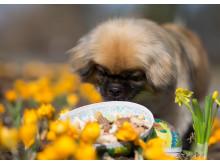 Hund med påskägg
