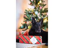 Hund med julklapp