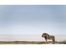 Une série faune et flore spectaculaire du photographe de nature Chris Schmid