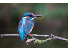 Sony naure kingfisher