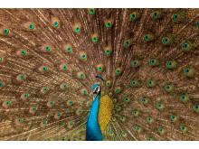 Satvik Bhatt, India, Entry, Open, Wildlife, 2017 Sony World Photography Awards