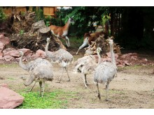 Zoo Leipzig - Darwin Nandus