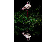 Cloud Flamingo, fot. Steiner Wang