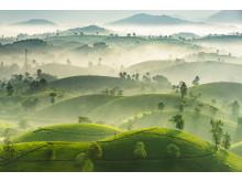 4039_11465_NguyenPhucThanh_Vietnam_Open_Landscape_2019