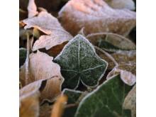 Vinterblade