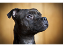 Agda är Årets bragdhund 2014
