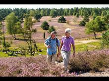 Brunsberg: vandring gjennom Lüneburger Heide