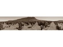 Kokerboom Vineyard