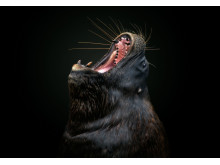 2620_1371915_0_ © Pedro Jarque Krebs, National Awards 1st Place, Peru, Shortlist, Open competition, Natural World _ Wildlife, 2019 Sony World Photography Awards