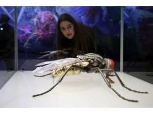 Panometer Leipzig: Eine Besucherin betrachtet ein Insektenmodell von Julia Stoess