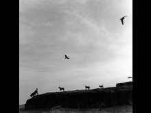 Graciela Iturbide, Perros Perdidos, India, 1998