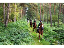 Schleppjagd durch den Wermsdorfer Wald
