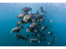 Noel Guevara, The Philippines, Entry, Open competition, Wildlife, 2017 Sony World Photography Awards