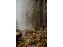 © Justyna Zdunczyk, Poland, Winner, Open Wildlife and Winner, Poland National Award, 2018 Sony World Photography Awards