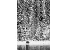 © marko Dimitrijevic, Switzerland, Shortlist, Professional competition, Natural World & Wildlife, 2020 SWPA (2)
