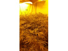 Cannabis discovered in Speke