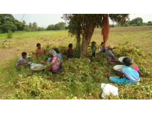 Bysponsorskap Hand in Hand Omipper, Indien