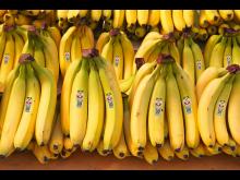 Bananer med Operation Smile loggan