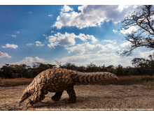 SWPA 2020_Brent Stirton, South Africa, Category Winner, Professional competition, Natural World & Wildlife