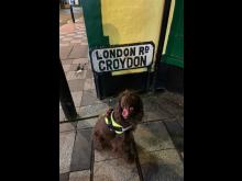 Met Police dog patrol