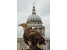 Freedom Eagle London