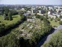 Rosengårdsfältets odlingsområde