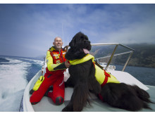 Superpower Dogs - Reef