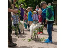 Barn och getter i Skånes Djurpark
