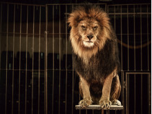 In defence of Britain's last lion tamer