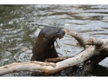Årets stora djurnyhet i Parken Zoo