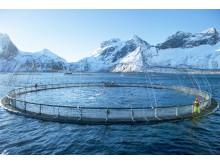 Norwegian aquaculture - Credit-Norwegian Seafood Council, Johan Wildhagen