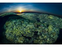 © Tobias Friedrich, Germany, Shortlist, Professional competition, Natural World & Wildlife, 2020 SWPA