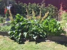 Odla ätbart, Tusen Trädgårdar