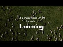 Beitefilm 1 Lamming skjermbilde