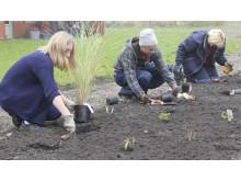 Gröna boenden - plantering