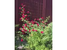 Det blommar under Tusen Trädgårdar