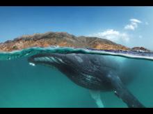 © Tobias Friedrich, Germany, Shortlist, Professional competition, Natural World & Wildlife, 2020 SWPA (1)
