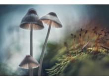 (c) Matti Virtanen, Mushrooms, 2016. Sony World Photography Awards.
