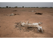 Senegal drought