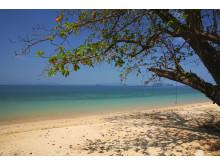 Det er strande som denne ved Klong Muang nær Krabi, der har en stor tiltrækningskraft på rejselystne danskere og har gjort Thailand til danskernes foretrukne oversøiske rejsemål.