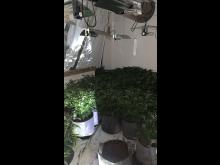 cannabis farm2