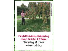Yrkesseminarium fruktträdsbeskärning