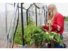 Odla unga odlare - I grönsakslandet