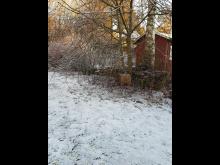 Igelkottshotell, Brf Umeåhus 1