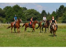 Leipzig und die Region sind ein Paradies für Pferdefreunde