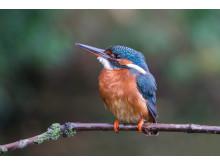 SonyNatureKingfisher1